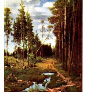 Старая открытка Просека в сосновом лесу