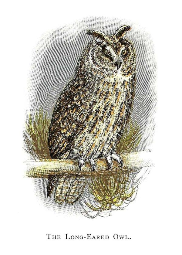 Открытка для посткроссинга «Ушастая сова»