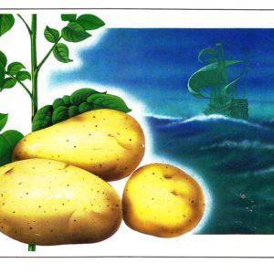 Открытка «Картофель»