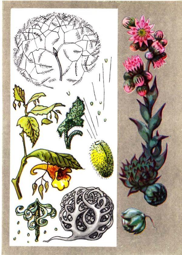 «Заботливые» растения