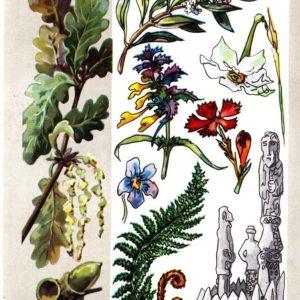 Легендарные растения