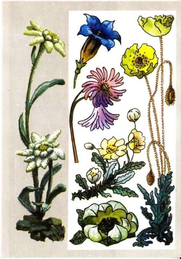 Высокогорные растения