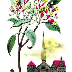 Открытка «Гвоздичное дерево»