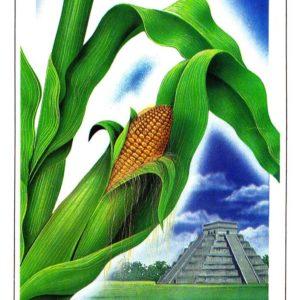 Открытка «Кукуруза»