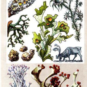 Растения-сфинксы