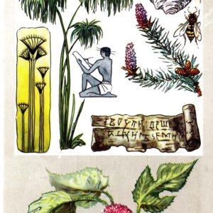 «Бумажные» растения