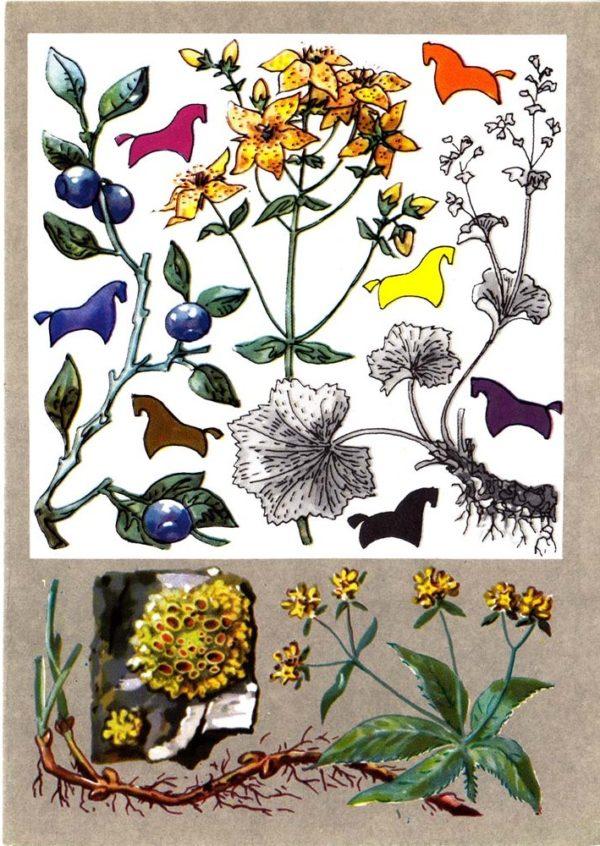 Красильные растения