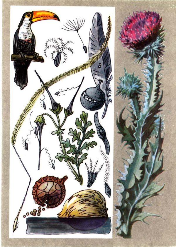 Семена путешественники
