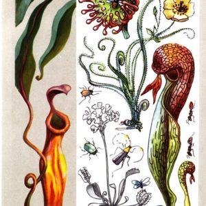 Хищные растения