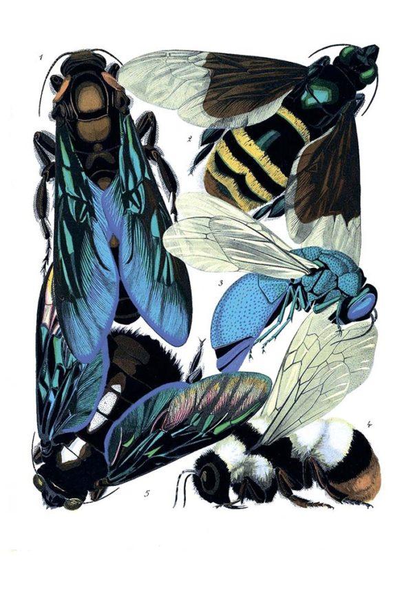 Открытка для посткроссинга «Осы, пчёлы и шмели»